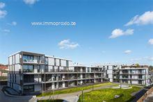 Nieuwbouw Project te koop in Lummen