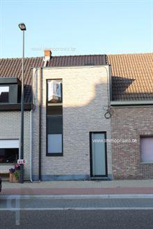 Nieuwbouw Huis te huur in Wetteren